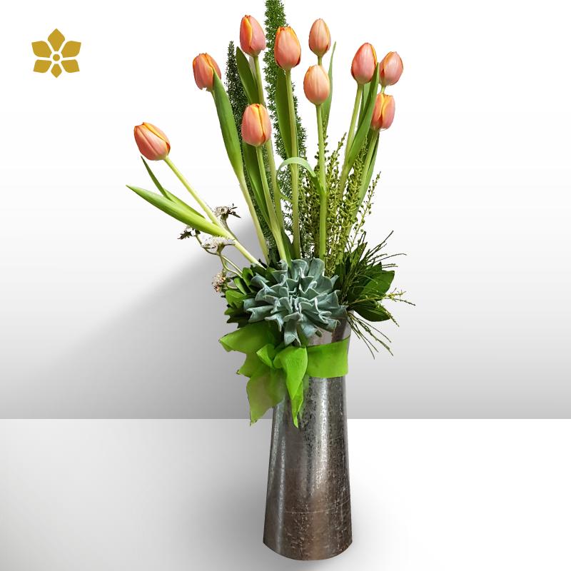 Suculentas y Tulipanes