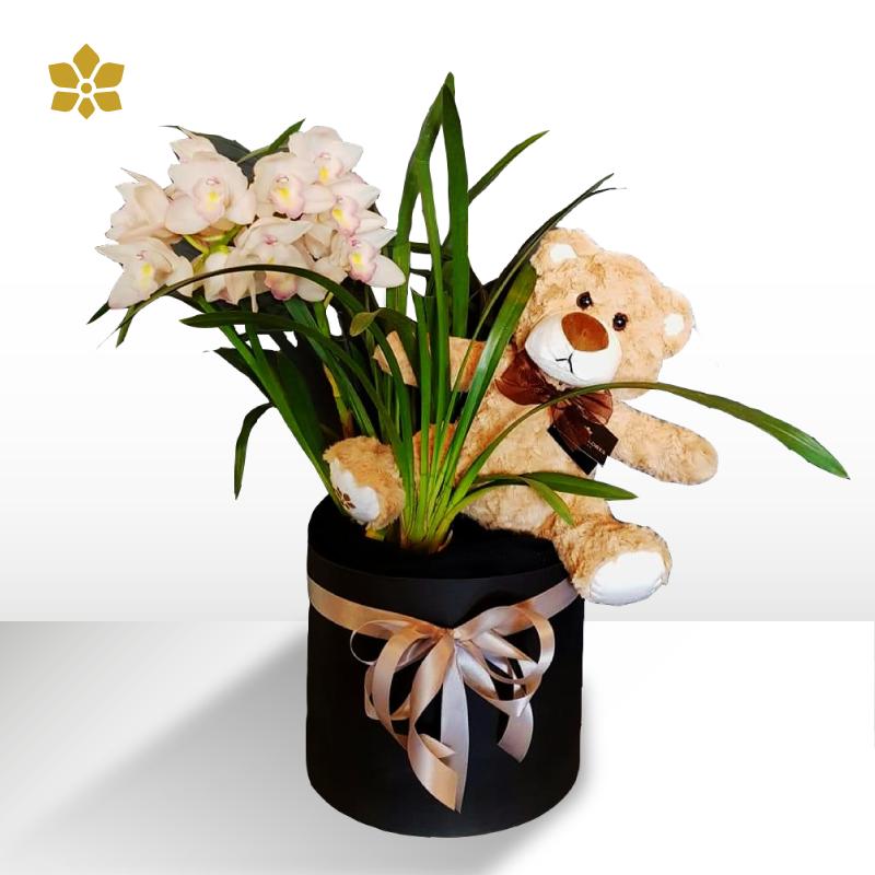 Teddy Orchid