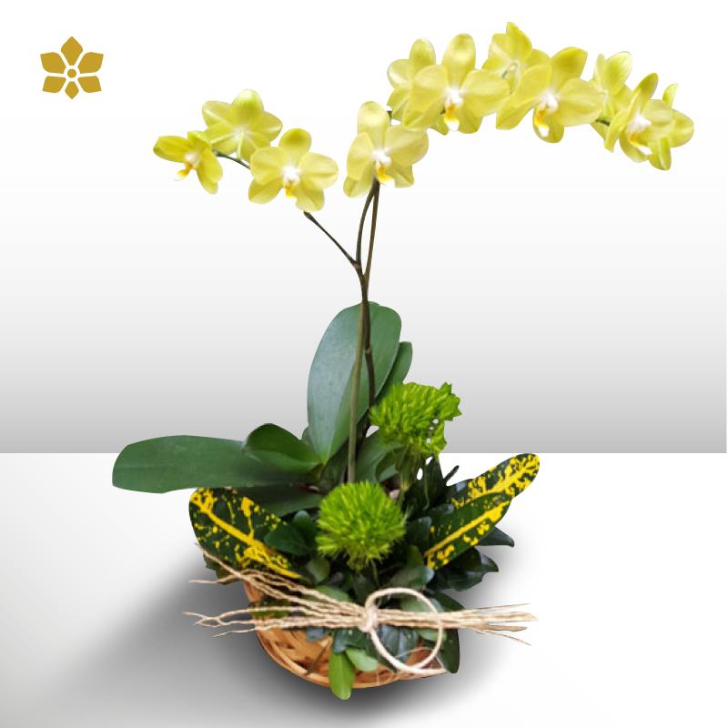 Orquídea Fantastica